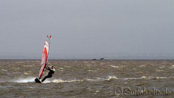 Ringkøbing Fjord, Hvide Sande Süd, Westwind, Dänemark, windsurfen