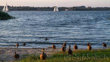 Segeln auf der Schlei bei Fahrdorf, Ostsee
