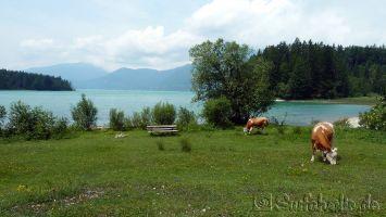 Walchensee, Sachenbach, Jachenau, Seppenbauerhof, windsurfen