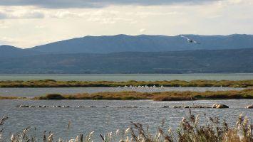 Flamingo, Ile des Pêcheurs