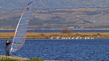 Leucate, Ile des Pêcheurs April 2012, Flamingos am Morgen