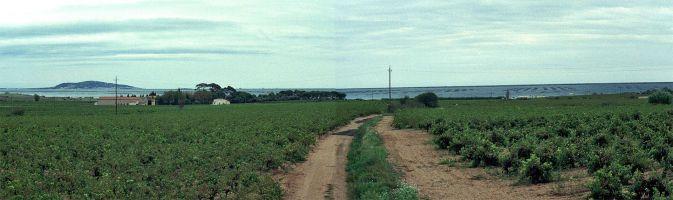 Marseillan, Bassin du Thau, Wein & Austern