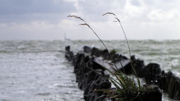 Hindeloopen - Buhnen am Strand