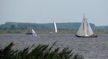 Windsurfer und Segler auf dem Lauwersmeer / Niederlande.
