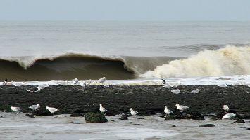 Nordseewelle bei Petten