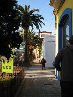 Tarifa, Palmen entlang der Hauptstrasse