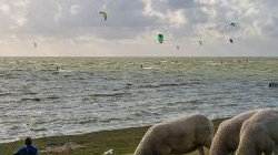 Windsurfen in Hindeloopen<br />bei SW 6-7 bft, August<br />2014